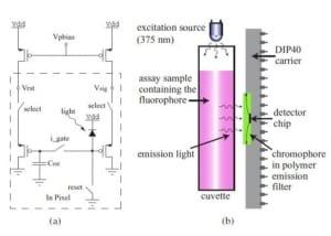A handheld fluorometer for measuring cellular metabolism